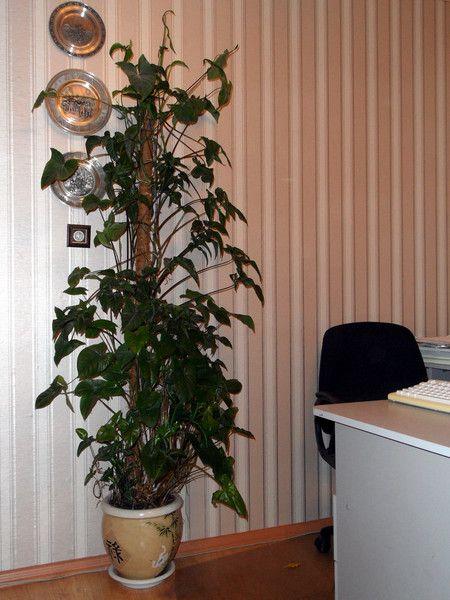 Я посадила гиппеаструм 2 недели назад с зелёными стеблями