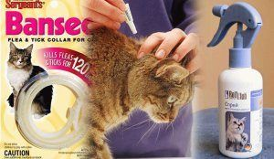 Блошки у кошки? Не проблема! Cредства от блох для кошек: чем вывести в домашних условиях
