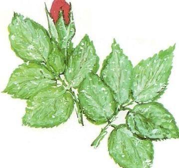 Болезни и вредители комнатных растений, меры профилактики и борьбы с болезнями комнатных растений