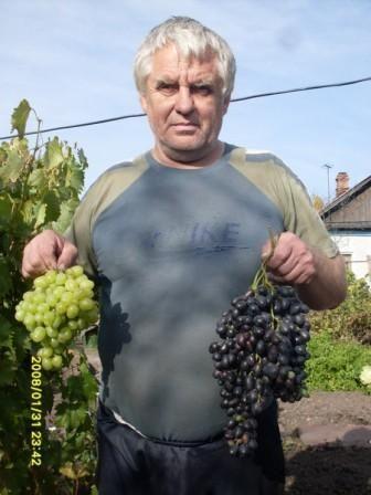 Сады и садоводство россии и сибири