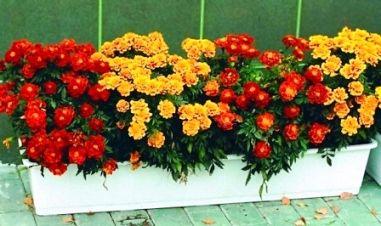 Цветы в горшках и контейнерах для декора на даче