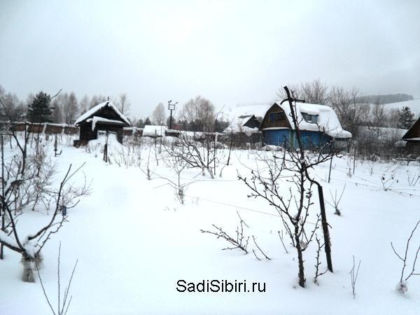 Фотографии сезон 2015 года из сада казанина геннадия петровича