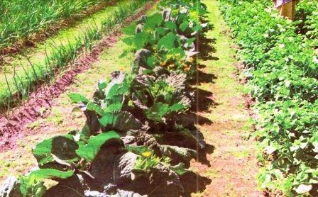 Гидрогель, его свойства и опыт применения в саду и огороде