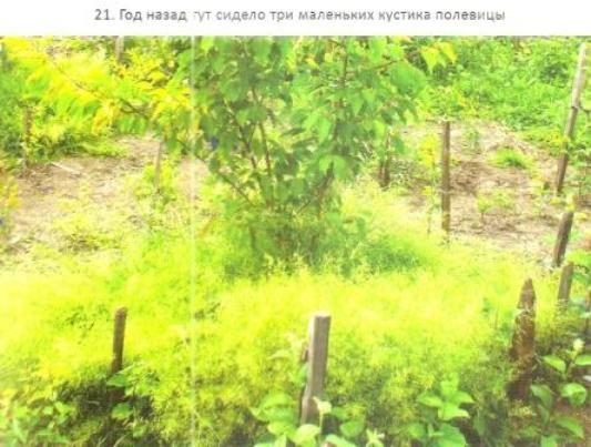 Глава третья из книги умный сад. Как перехитрить климат: что значит хорошее место для сада