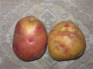 Голландский картофель: «иван да марья» описание сорта, характеристики, фото