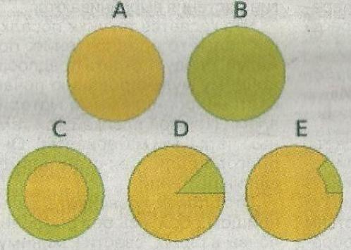 Химеры - растения с генетически различными клетками, группами клеток или тканями, наблюдения в практике садоводства