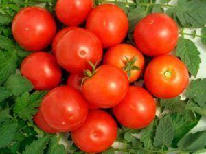 Идеальный томат «яблонька россии» описание, характеристика и фото