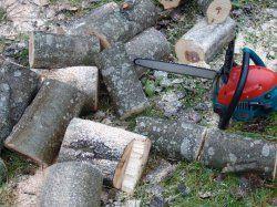 Использование опилок на дачном участке, приготовление компостов, удобрительных смесей
