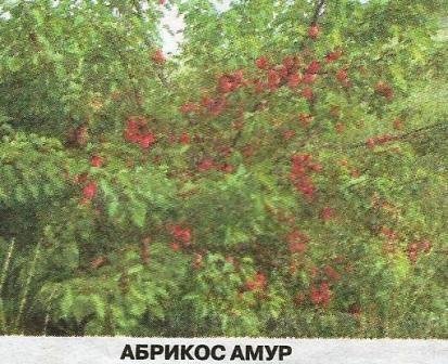 Итоги сезона 2013 года в саду евгения ивановича пискунова из хакасии
