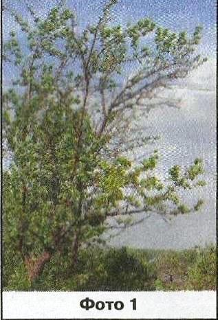 Итоги зимы, весна 2014 года в уральском саду виталия николаевича шаламова