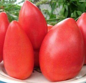 Изящный и вкусный томат «супермодель»: описание сорта, фото