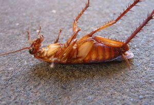 Эффективные способы как избавиться от домашних тараканов в квартире в домашних условиях