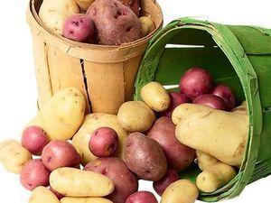 Эффективные удобрения для картофеля при посадке