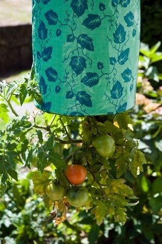 d0037-14-tomat