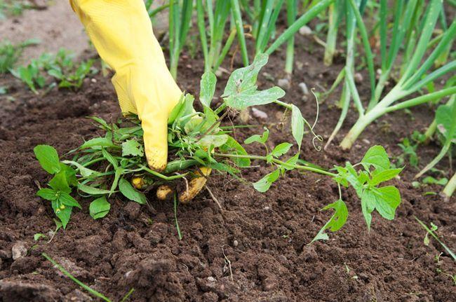 Как бороться с сорняками на огороде, методы борьбы на своем участке