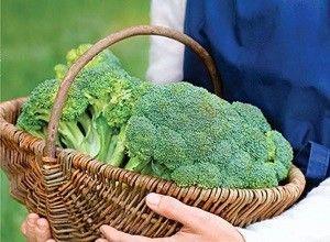 Как правильно хранить капусту брокколи на зиму в домашних условиях: в холодильнике или в морозильной камере?
