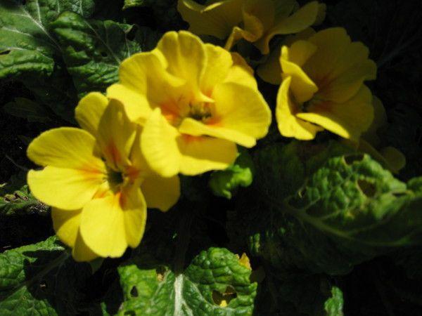 Купила азалию цветущую. Дома стоит неделю. Можно ли перевалить в другой горшок или пока не стоит?