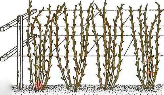 полив и уход за урожаем