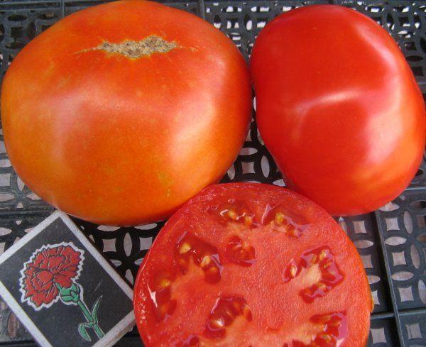 Сорт томата Самара