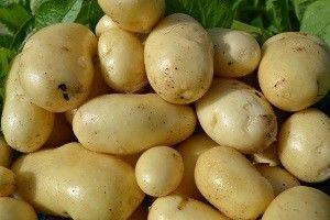 Картофель импала — выбор в пользу высокого качества!