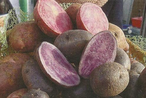 Картофель с мякотью разного цвета, особенности химического состава сортов разного цвета