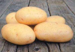 Картофель сорта «таисия», обладающий потрясающей характеристикой: описание сорта, фото