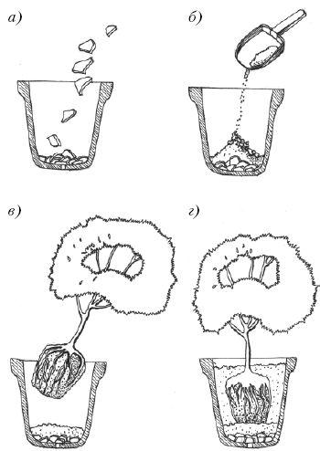 Когда лучше пересаживать комнатные цветы, как правильно пересадить цветок
