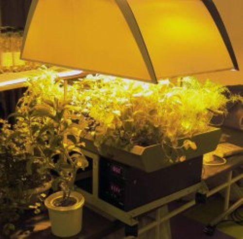 Лампы для досветки рассады, типы ламп для досветки рассады