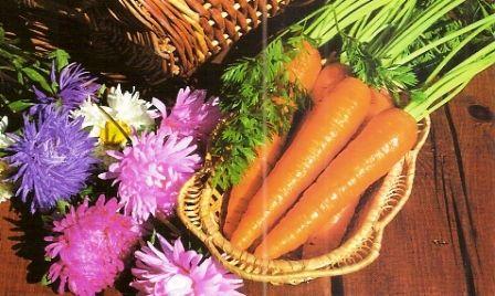 Лечебные свойства моркови, народные рецепты