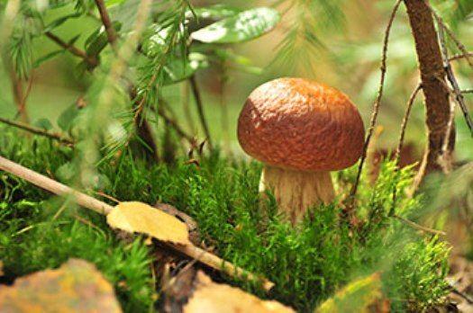 Микориза - параллельный мир грибов, использование их в садоводстве
