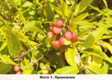 Наблюдения за уральским садом в августе виталия шаламова
