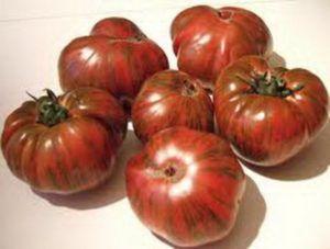 Неповторимый и запоминающийся томат «полосатый шоколад»: описание сорта, фото