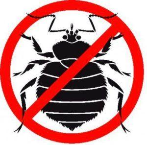 Обзор современных инсектицидов: лучшее средства от клопов в домашних условиях