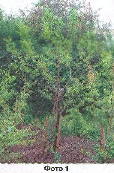 Описание состояния уральского сада виталия николаевича шаламова летом 2014 года, агротехнические мероприятия
