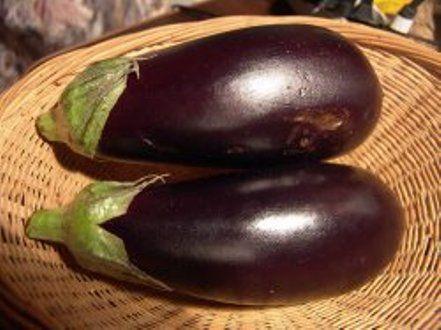 Особенности выращивания баклажана в северных регионах