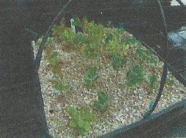 Перлит и вермикулит, свойства и применение в садоводстве и огородничестве