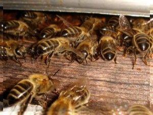 Подкормка пчел. Воровство у пчел.