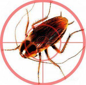 Подробно о том, как избавится от тараканов в доме: самые эффективные способы борьбы, профилактика