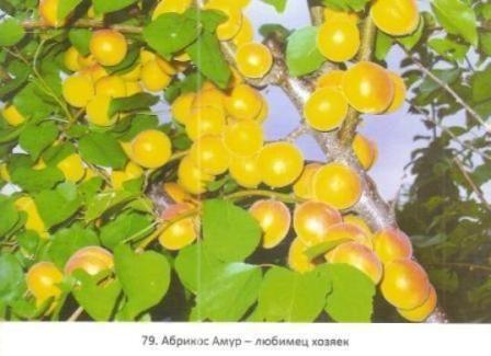 Плодовый рай валерия железова в саяногорске
