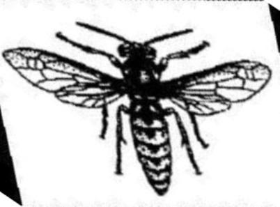 Полезные насекомые в нашем саду, их охрана и использование в борьбе с вредителями