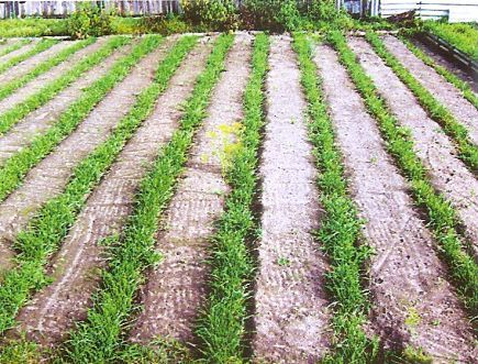 Польза сорняков, зелёное удобрение из сорняков