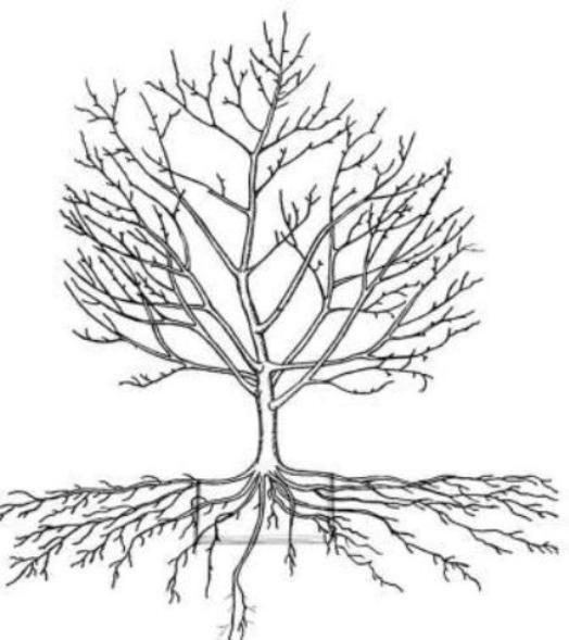 Правильная обрезка плодовых деревьев в саду