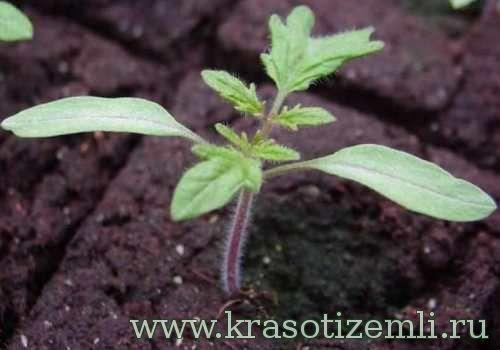 Правильная подготовка почвы для рассады