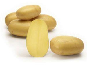 Представляем вашему вниманию сорт картофеля «королева анна», с его характеристикой, описанием сорта и фото