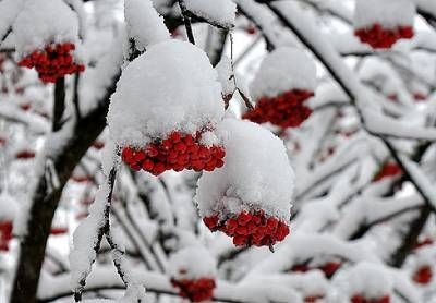 Причины повреждения и гибели садов в период зимовки и меры по повышению зимостойкости плодовых культур