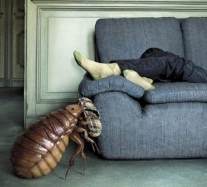 Профилактика заражения в домашних условиях: что делать, если у соседей клопы?