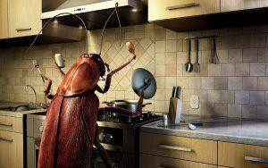 Рассмотрим откуда берутся тараканы в квартире или доме? Как не допустить появления и как с ними бороться если появились