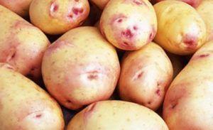 Разнообразный картофель «лимонка» : описание сорта, фото, характеристика
