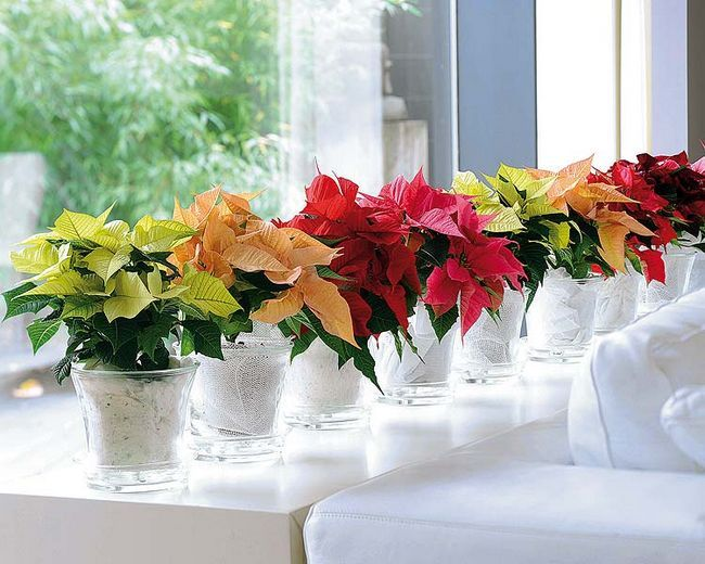 Сансевиерия: правильный уход за растением в домашних условиях