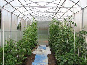 Каждому овощу своя «квартира»